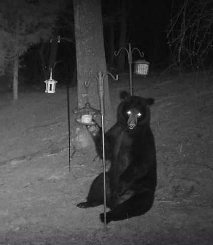 Nighttime photo of seated brown bear at bird feeder